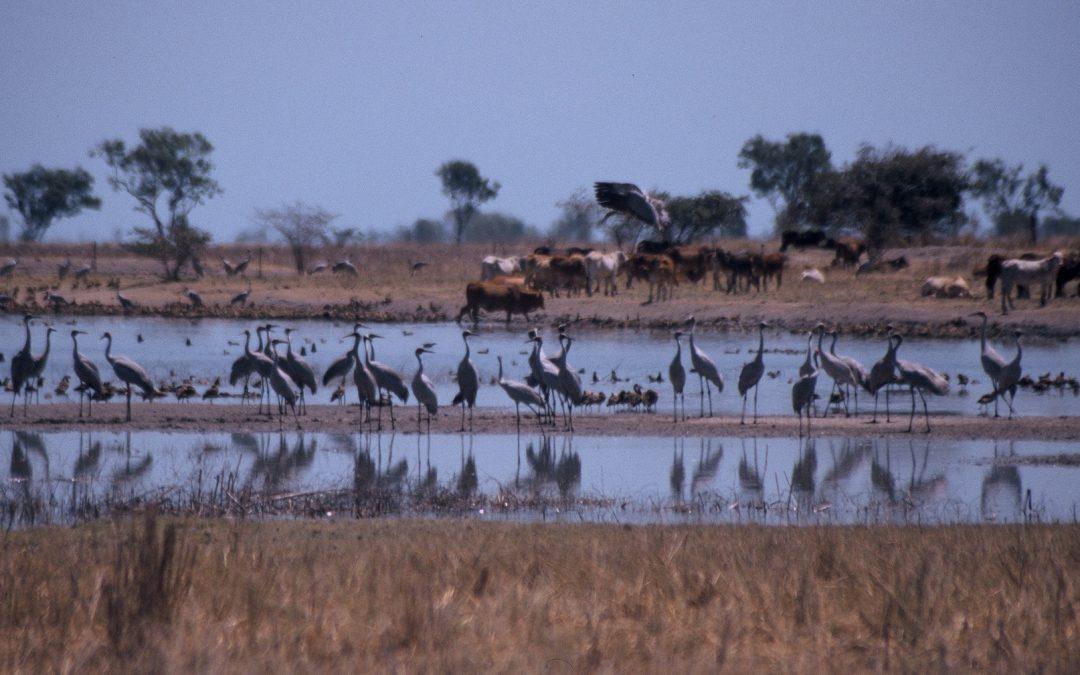 Birdwatching Hot Spots